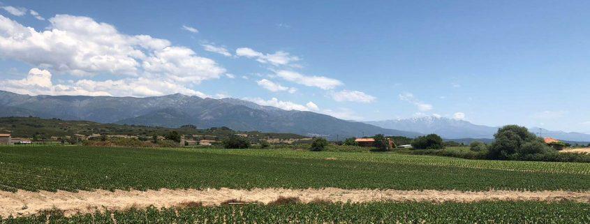 plantacion-pimenton